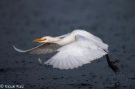 09 Birdingmurcia - Kique Ruiz