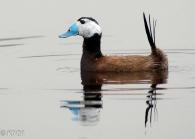 10 Birdingmurcia - Kique Ruiz