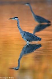 11 Birdingmurcia - Kique Ruiz