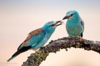 13 Birdingmurcia - Kique Ruiz