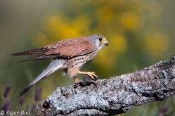 14 Birdingmurcia - Kique Ruiz