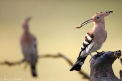 15 Birdingmurcia - Kique Ruiz