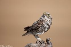 16 Birdingmurcia - Kique Ruiz