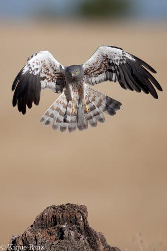 17 Birdingmurcia - Kique Ruiz