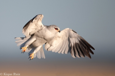 18 Birdingmurcia - Kique Ruiz