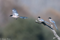 19 Birdingmurcia - Kique Ruiz