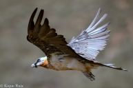 22 Birdingmurcia - Kique Ruiz