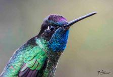 04 Joy Murillo - birdingmurcia