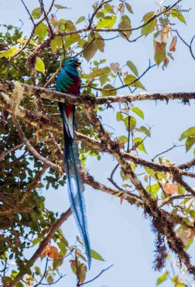 17 Joy Murillo - birdingmurcia