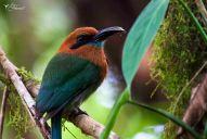 18 Joy Murillo - birdingmurcia