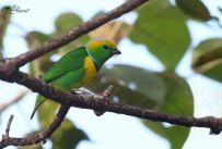 24 Joy Murillo - birdingmurcia