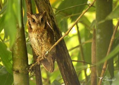 30 Joy Murillo - birdingmurcia