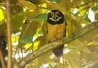 32 Joy Murillo - birdingmurcia