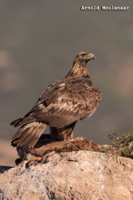 birdingmurcia-Arnold Moolenaar 02