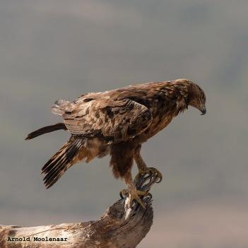 birdingmurcia-Arnold Moolenaar 03